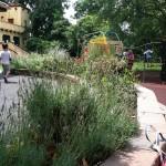 Garden at Glen Echo Park