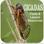 Back Yard Science: 17 Year Cicadas