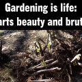 Gardening is life: equal parts beauty and brute force.