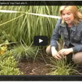 how to rain garden video