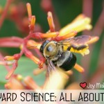 Back Yard Science: All about bees