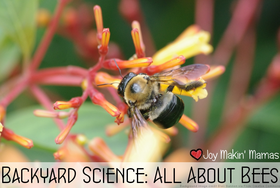 backyard science all about bees lesson activity playdate plan theme