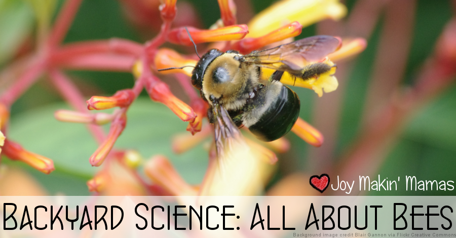 Backyard science all about bees lesson resources playdate activity story time theme