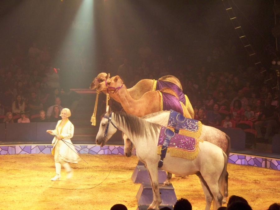 horses and camels at Big Apple Circus Metamorphosis Joy Makin Mamas