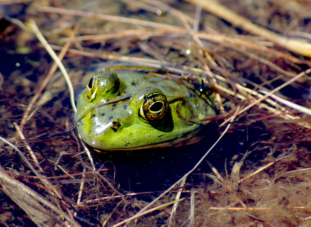 frog Chris Luczkow flickr
