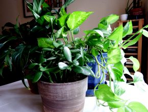 easy to grow houseplants for busy families joy makin mamas