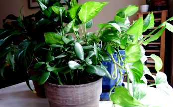 easy to grow houseplants for busy families joy makin mamas