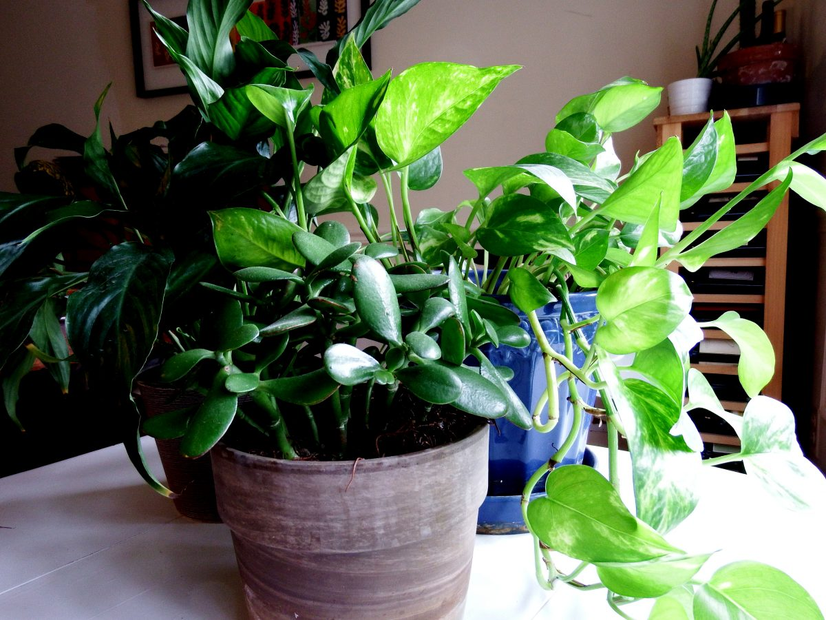 Easy houseplants for busy families joy makin 39 mamas for Easy to grow houseplants